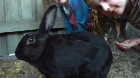 Mon lapin Hoppy
